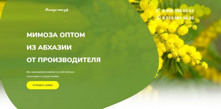 Оптом продажа мимозы в Москве и РФ